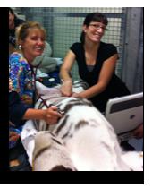 Tiger Ultrasound